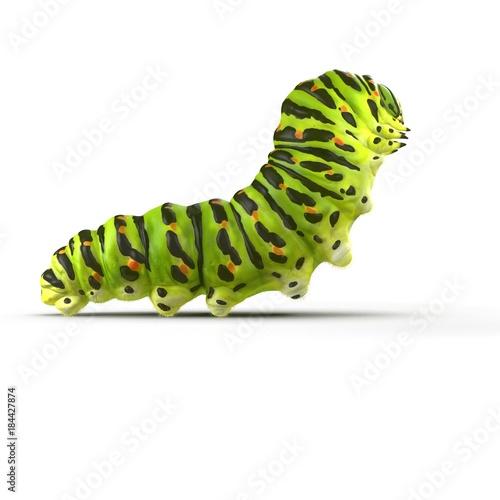 Fotografía  Swallowtail caterpillar or Papilio Machaon on a white