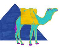Egyptian Dromedary