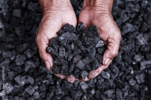 Coal mining - coal miner in the man hands of coal background Canvas