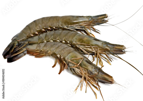 tiger shrimp isolated on white background
