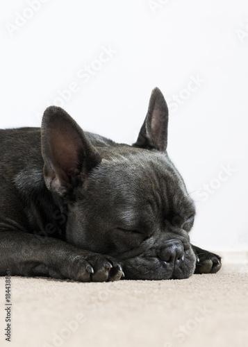 Deurstickers Franse bulldog sleeping french bulldog