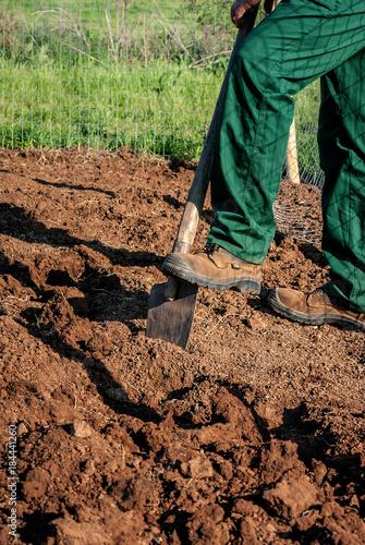 Fotografie, Obraz  Lavorazione del terreno prima della coltivazione