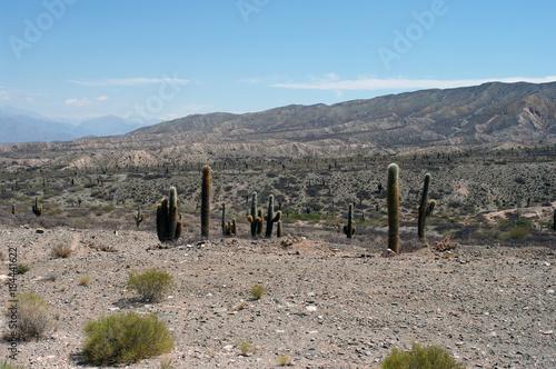 Papiers peints Taupe Cactus dans le paysage