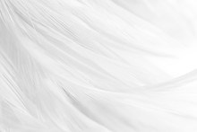 Black And White Feather Texture Background