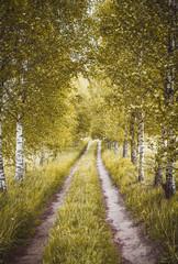 Panel Szklany Optyczne powiększenie Alley of green birches