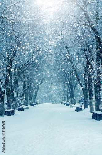 Photo sur Aluminium Bleu clair Winter nature, snow alley
