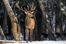Smell Of Spring:Deer Breathing...