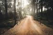 canvas print picture - Verlassene Straße in einer Waldichtung auf Sardinien