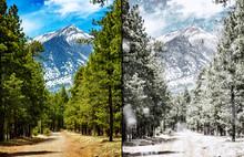 Flagstaff Arizona Forest Summer To Winter Scene