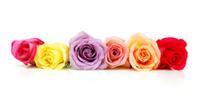 Colorful Bouquet Roses Isolate...