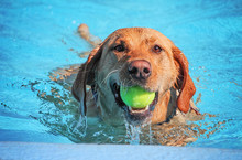 A Cute Dog Swimming In A Publi...