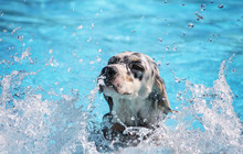 A Cute Dog Swimming In A Publi...