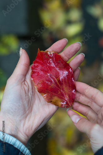 Red autumn leaf on a female hand Canvas Print
