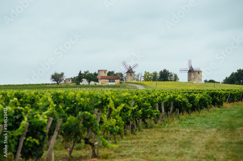 French vineyards and old wind mills