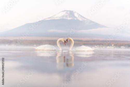 White Couple Swan feeling romantic and love  at Lake Yamanaka with Mt. Fuji background