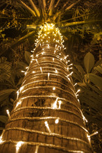 Palm Tree Decorated With Garla...