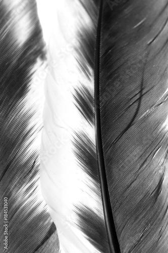 Foto-Kuscheldecke premium - black and white pen as background (von studybos)