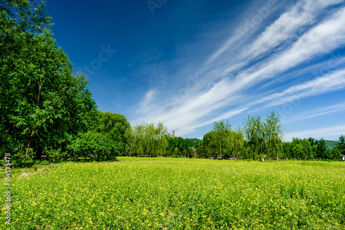 Field of spring grass and perfect sky.