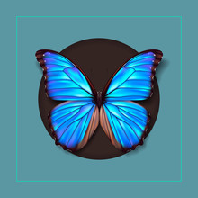 Realistic Picture Butterfly Morpho Didius. Vector Art
