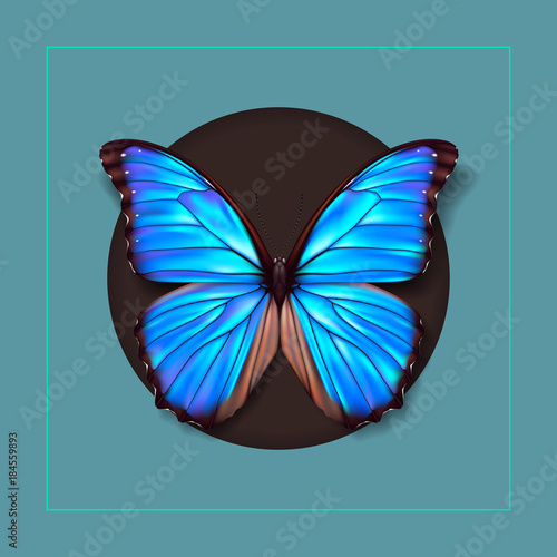 Fotografie, Obraz Realistic picture butterfly Morpho Didius. Vector art