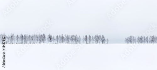 Poster Wit Winter minimalistic landscape. A row of bare trees against a white snow and white sky background.