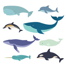 Set Of Vector Whales And Dolph...