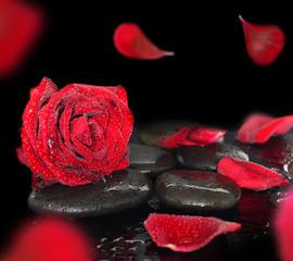 FototapetaSpa stones and rose petals over black background
