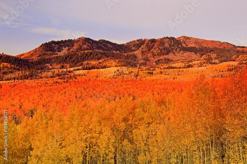Foto op Aluminium Oranje eclat Wasatch autumn scene, Utah.