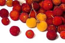 Strawberry Tree (Arbutus Unedo...