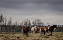 Horses 20150314