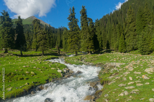 Mountain river with amazing mountain landscape, green meadows and spruce trees #184653223