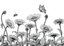 Daisy Field Hand Drawing Engraving Illustration Isolated On White Background,Daisy Field Vintage Style Wallpaper