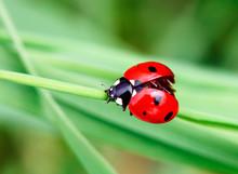 Macro Photo Of Ladybug In The ...