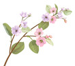 Spring blossom (bloom), branch with mauve, pink apple tree flowers. Bouquet light floret, buds, green leaves on white background. Digital draw, close-up in watercolor style, vintage, vector