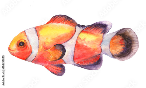 Fotomural Watercolor illustration of clownfish
