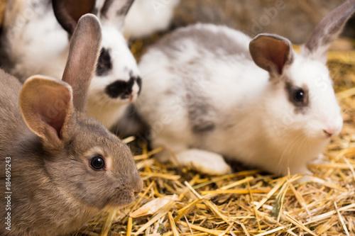 rabbits at the cage