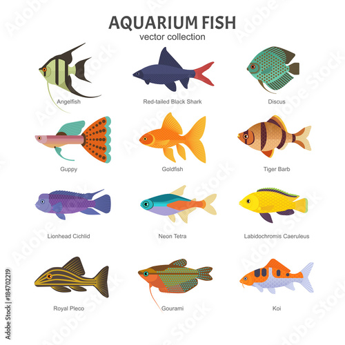 Aquarium Freshwater Fish Set Vector Illustration Of Different Types