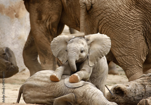 Deurstickers Olifant Baby Elephants Playing