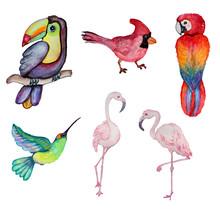 Watercolor Exotic Birds Clipart