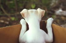 Cute Puppy In A Box - Back View