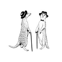 Walking Gentleman Meerkats. Ve...