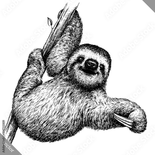 Vászonkép  black and white engrave isolated sloth vector illustration