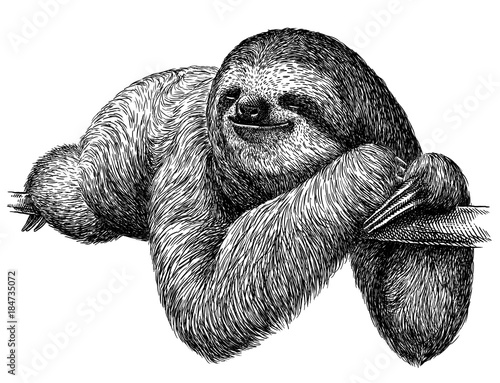 black and white engrave isolated sloth illustration Wallpaper Mural