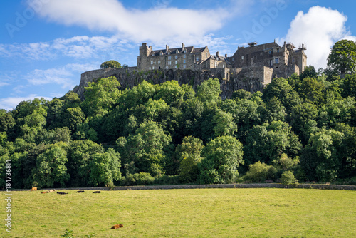 Fotografie, Obraz Cows in Pasture at Stirling Castle in Scotland