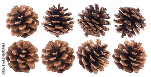 Fir cones isolated on white background closeup, pine cone collection