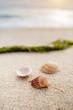 Ribbed seashells and seaweed on coastal sands, sandy beach seascape, vertical