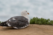 Seagull Sits On Sandy Cliff