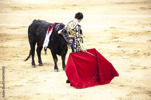 Corrida de toros. Spanish bullfight. .The enraged bull attacks the bullfighter.