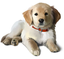 The Puppy Golden Labrador Wate...