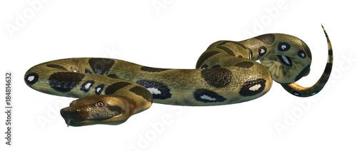 3D Rendering Green Anaconda on White Canvas Print